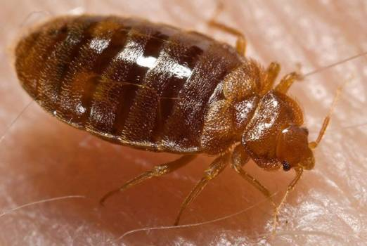 US Fume: Bed Bugs Fumigation